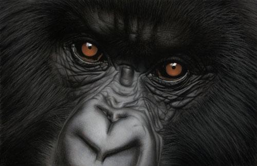 Alexander-Eyes-of-Virunga-r
